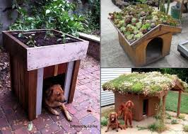 Urban Gardening on Dog House