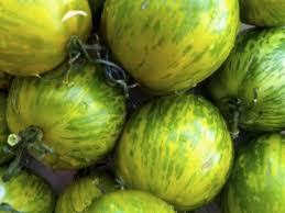 Striped Green Zebra Tomato