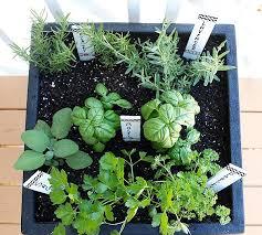 Organic Garden Herbs