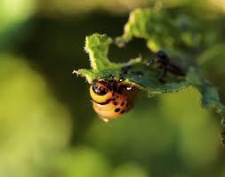 Organic Gardening Tips for Pest Control