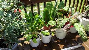 Organic Vegetables in Containers