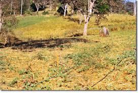 Zaytuna Farm 2002