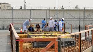 Prisoners Urban Gardening