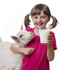Goat Dairy for Kids