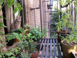 Urban Gardening on Fire Escape
