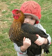 Kids Best Backyard Chickens