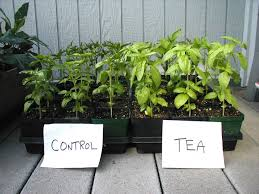 Grow Organic Using Compost Tea