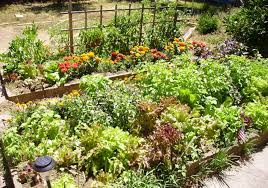 Organic Gardening with Success