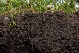Organic Garden Soil Health