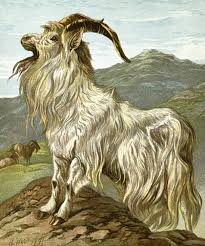 History of Goat Domestication