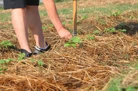 Grow Organic with Mulch