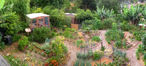 Urban Garden Food Forest