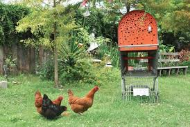 Urban Chicken Coop Recycled Cart