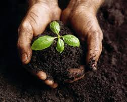 Grow Organic in Healthy Soil